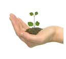 Seed growing in hand